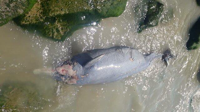 مشاهده لاشه دلفین در ساحل بوشهر